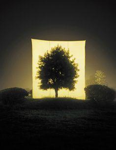 Myoung Ho Lee   Tree Series. »