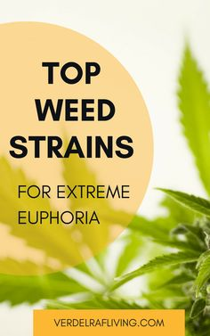 Best Cannabis strains and CBD oils for euphoria and treatment of depression. Best Medication For Depression, Coping With Depression, Fighting Depression, Medical Benefits Of Cannabis, Medical Marijuana, Marijuana Funny, Marijuana Recipes, Cannabis Growing, Vegetable Gardening