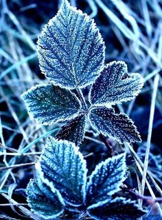Photography Secrets The Pros Don't Want You To Know Winter Photography, Nature Photography, Winter Flowers, Winter Leaves, Winter Beauty, Winter Wonder, Blue Aesthetic, Winter Scenes, Winter Garden