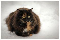 winter portrait 2 by Meow-pics.deviantart.com on @deviantART