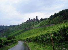 Castles, vineyards of the Rhine - Germany