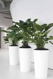 Enhance the atmosphere at your home, office and commercial spaces with the Foliage #IndoorPlantHire in Melbourne. We offer you different types of plants from table top to the large ones at very reasonable price. We also provide you regular maintenance and check for the health of these fabulous beauties.