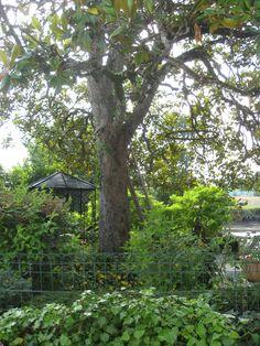 Mai's garden