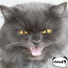 This grumpy cat could use a #Cloud9 treat!