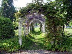 wisteria arbor tunnel