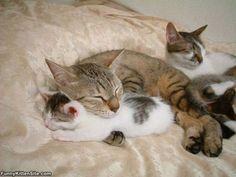 Cute_Warm_Kittens