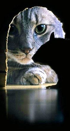 Animal Houses- Pet Shelters = This one got pinned on my website -see the Cat Hotel !