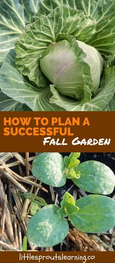 There is a very short window in the fall between the sweltering heat like the devil's armpit, to too cold to grow stuff. I wanted to know how to plan a successful fall garden. After years of trying, I have learned very few things will grow in the garden in the fall from seed to production. What can you do to have a succesful fall garden?