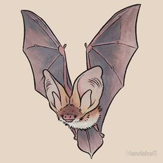 Bats are cute! / Check out the other pictures in this series of European bats as well: / Greater mouse-eared bats / Greater mouse-eared bat / Three greater mouse-eared bats / Lesser horseshoe bat / Pipistrelle Murcielago Animal, Animal Drawings, Cute Drawings, Cute Sketches, Bat Sketch, Doodle Art, Cute Bat, Creature Design, Vampires