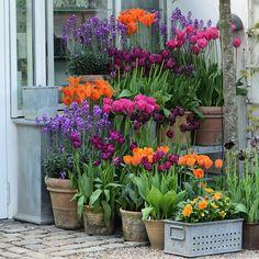 3 Simple and Stylish Tips: Backyard Garden Layout Seating Areas creative garden ideas food. Container Herb Garden, Container Gardening Vegetables, Container Flowers, Container Plants, Garden Bulbs, Garden Pots, Garden Trees, Balcony Garden, Backyard Garden Design