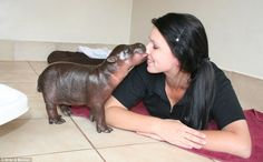 Prince Harry the pygmy hippo calf (yep, he's named after that Prince Harry) gives his caretaker some love.