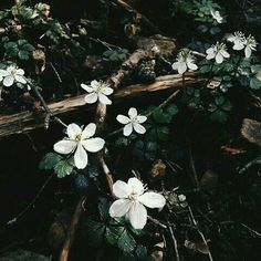 dark spring aesthetic discovered by Camila on We Heart It Dark Green Aesthetic, Spring Aesthetic, Nature Aesthetic, Flower Aesthetic, Hawke Dragon Age, Dragon Age Inquisition, Darth Revan, Wallpaper Harry Potter, The Wicked The Divine