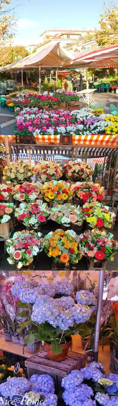 ~Take a short drive along the French Riviera to my favorite flower market in Nice | House of Beccaria