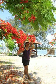 mau liburan Murah di Lombok ? http://www.goldenlomboktransport.com