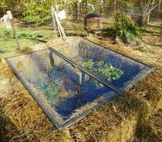 Straw Bale Gardening, great in all climates from the Arctic to the Caribbean islands! is part of Cold frame Straw Bale Gardening is essentially container gardening, without the cost of a container o - Straw Bale Gardening, Gardening Tips, Organic Gardening, Garden Care, Garden Beds, Terrace Garden, Farm Gardens, Outdoor Gardens, Rooftop Gardens