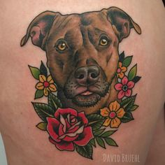 Pitbull portrait from today. Thanks Sabrina!