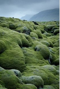 I first thought about a trip to Iceland with my friend last year. Now I see Iceland pictures and info everywhere. Lava fields covered with moss in Vestur-Skaftafellssysla, Iceland Oh The Places You'll Go, Places To Travel, Places To Visit, All Nature, Amazing Nature, Belleza Natural, Natural Wonders, Belle Photo, Beautiful Landscapes