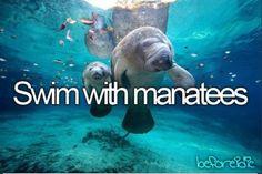 Adopting a manatee soon, so maybe?
