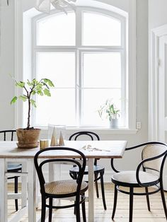 Interior design inspiration for black Thonet bentwood chairs.