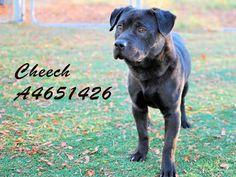 www.PetHarbor.com pet:LACO3.A4651426