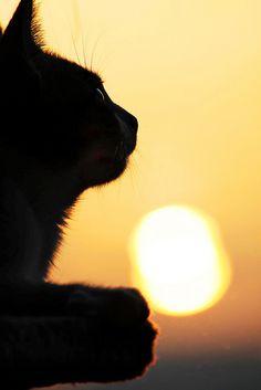 The lazy sunbather by HarryBo73, via Flickr
