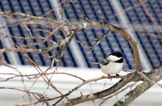 Solar energy is a boon for the environment, but some methods can be harmful to birds and other wildlife. Here's how to go solar safely.