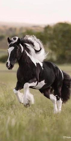 This beautiful animal is one of the most beautiful horses I have ever seen. # Big # # # – louloubanana # – # – # # beautiful # animals # are # one # the # most beautiful # horses # I've seen. Cute Horses, Pretty Horses, Horse Love, Beautiful Creatures, Animals Beautiful, Funny Horse Videos, Cheval Pie, Most Beautiful Horses, Beautiful Gorgeous