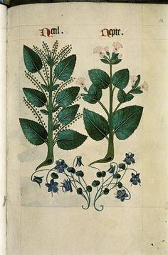 http://upload.wikimedia.org/wikipedia/commons/e/ee/The_Tudor_pattern_book_MS._Ashmole_1504_24.jpg