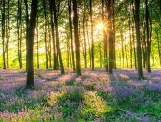 Pokemon Go is having a huge positive impact on mental health Fb Cover Photos Quotes, Timeline Cover Photos, English Bluebells, Country Living Magazine, Salud Natural, Beautiful Forest, New Forest, Pokemon Go, Natural Healing