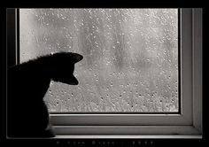Gary the Cat: Rainy Days for Cats