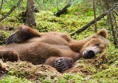 Relaxed Brown Bear Katmai National Park Alaska by Hugh Rose Photography, via alaska-in-pictures.com