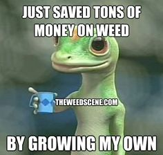 Just saved tons of money on weed These are some cool Funny #Marijuana Pins but #OMG check this out #Marijuana  www.budhubinc.com https://www.facebook.com/BudHubInc (Like OurPage)