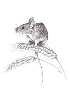 Field mouse by Viuru on DeviantArt