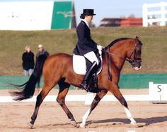 Arabian Sport Horse :: ALEROS by Cal Dorado. Nat'l Champion 3rd Level Dressage
