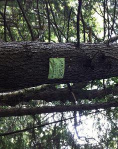 the ledges nude sunbather sign hiking trail harriman reservoir vermont yna