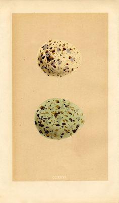 eggs+morris+vintage+image+GraphicsFairy005sm.jpg 940×1.600 Pixel