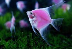 En Taipéi se celebra la exposición de fauna marina Taiwan International Aquarium Expo donde el público puede ver animales marinos exóticos.