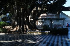 alameda apodaca Celestial, Outdoor, Cities, Fotografia, Outdoors, Outdoor Living, Garden