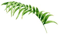 Tiare Tahiti – Herb & Root | Luxurious Perfume Oils, Bath Oils, and Massage Oils Tiare Tahiti, Roll On Perfume, Massage Oil, Perfume Oils, Shea Butter, Bath And Body, Plant Leaves, Exotic, Fragrance