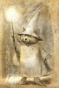Wizard Kitty? petra brown   Tumblr