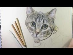 Speed Drawing - Tabby Cat   http://www.youtube.com/watch?v=EGo_mdUE8uU=1=endscreen%23