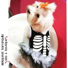 """""""Nuestra Estrellita  Hoy con un Skeleton TUTU  Halloween tambien Es ocasion para usar TUTUS!!  Visitanos! Calle 82 # 42 G -06 LOCAL 4 !!…"""""""