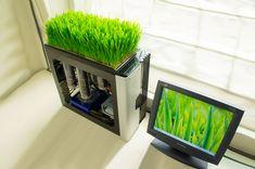 Bio Computer Living Grass Computer | Total Geekdom