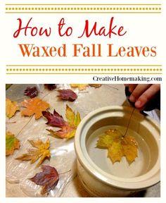 waxed leaves