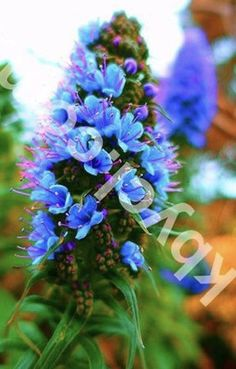 Photography Printables /Downloads ONLY $0.99 @ www.kbycl.com  Artwork that's fresh, unique and affordable. Landscape photography that will add a splash of color and banish that blank wall at home or work.