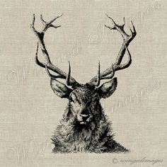 Deer I. Instant Download Digital Image No.196 Iron-On Transfer to Fabric (burlap, linen) Paper Prints (cards, tags)