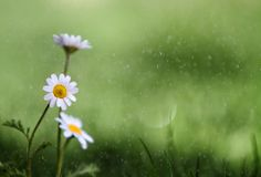 Very shallow depth-of-field and restricted use of colors makes this one pretty artistic. By Abdulkadir Abaz on 500px.com