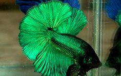 Forrest green rare color