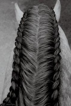 This is gorgeous! New show ring trend? #arabianhorses #horseshow #arabians