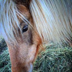 Country Home Farm's Beautiful pony!!